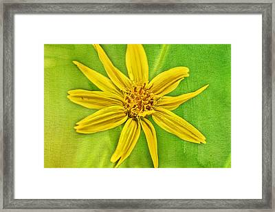 Yellow Mountain Bloom Framed Print