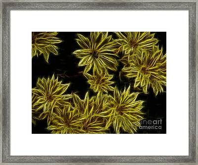 Yellow Mums Framed Print by Amanda Collins