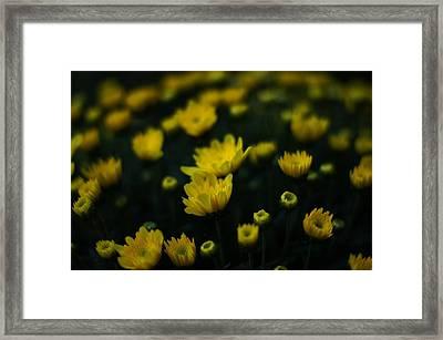 Yellow Mums Framed Print by Doug Hubbard