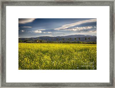 Yellow Mustard And Palm Trees In Napa Valley Framed Print by George Oze