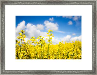 Yellow Mustard Field Framed Print