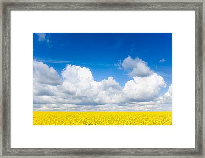 Yellow Mustard Fields Under A Deep Blue Sky Framed Print