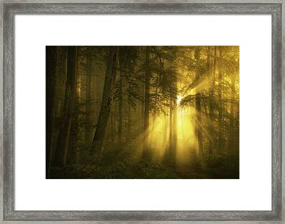 Yellow Framed Print by Norbert Maier