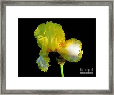 Yellow On Black Framed Print