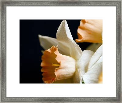 Yellow On Black Framed Print by John Holloway