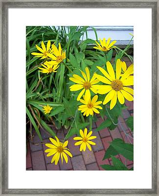 Yellow On Brick Road Framed Print