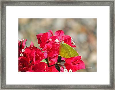 Yellow On Fuschia Framed Print by Suzanne Gaff