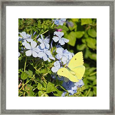 Yellow On Periwinkle Framed Print