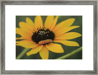 Framed Print featuring the photograph Yellow On Yellow by Alicia Knust