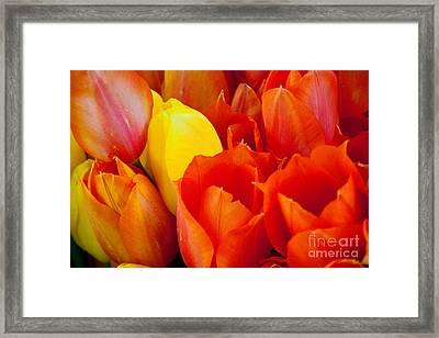 Yellow One Framed Print by Dana Kern