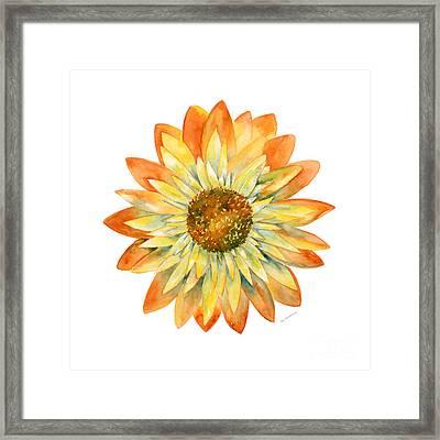 Yellow Orange Daisy Framed Print by Amy Kirkpatrick
