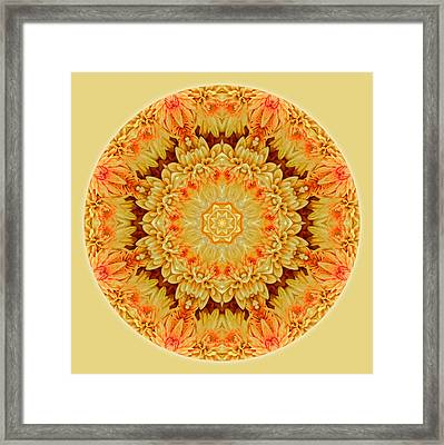 Yellow Orange Mum Mandala Framed Print