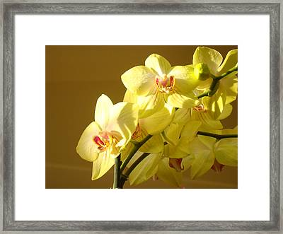 Yellow Orange Orchid Flower Bouquet Orchids Framed Print by Baslee Troutman