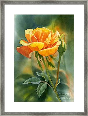 Yellow Orange Rose With Background Framed Print by Sharon Freeman