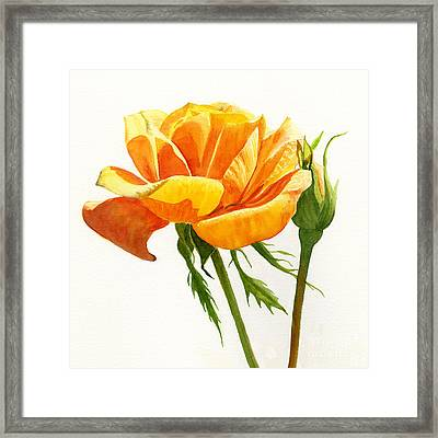 Yellow Orange Rose With Bud On White Framed Print by Sharon Freeman