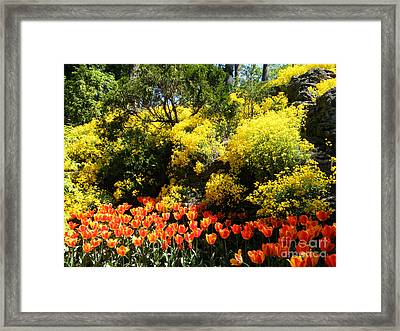 Yellow Orange - Springtime Framed Print by Phil Banks