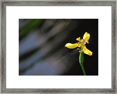Framed Print featuring the photograph Yellow Orchid by Amee Cave