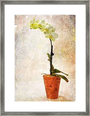 Framed Print featuring the photograph Yellow Orchid by Patti Deters