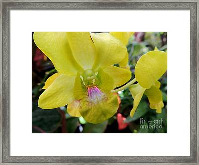 Framed Print featuring the photograph Yellow Orchid by Kristine Merc