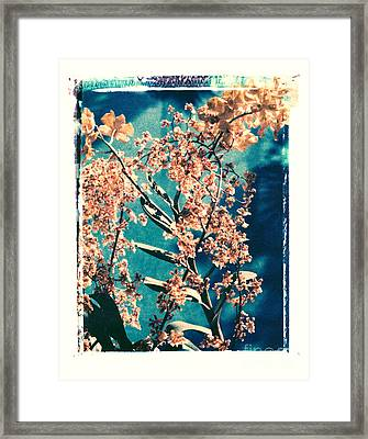 Yellow Orchids Framed Print by Deborah Gray Mitchell