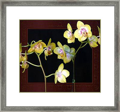 Yellow Orchids Framed Print by Mindy Newman