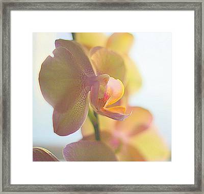 Yellow Orchids Phalaenopsis I Framed Print
