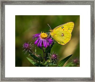 Yellow Over Purple Framed Print