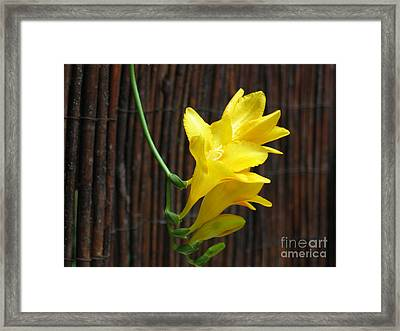 Yellow Petals Framed Print by HEVi FineArt