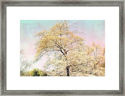 Yellow Pink Nature Trees - Dreamy Fantasy Surreal Yellow Pink Golden Trees Nature Landscape Framed Print by Kathy Fornal