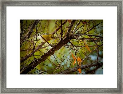 Yellow Pink Warbler Framed Print by Linda Unger