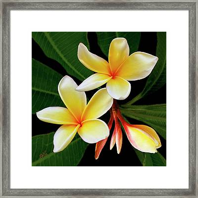 Yellow Plumeria Framed Print