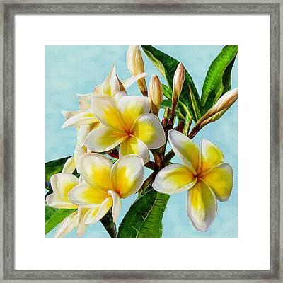 Yellow Plumeria Framed Print by Jane Schnetlage