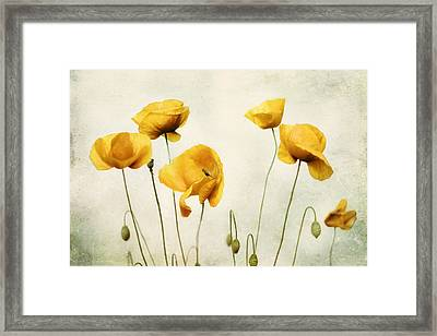 Yellow Poppy Photography - Yellow Poppies - Yellow Flowers - Olive Green Yellow Floral Wall Art Framed Print by Amy Tyler