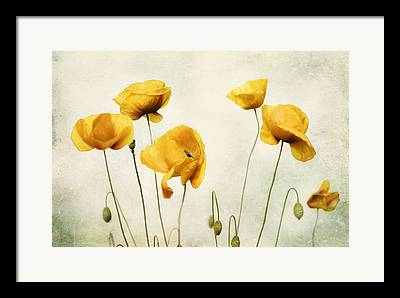 Print Of Poppy Framed Prints