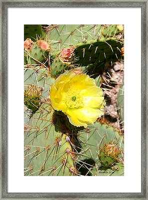 Yellow Prickly Framed Print by Dick Botkin