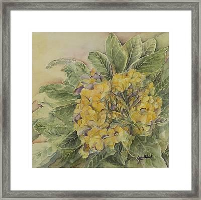 Yellow Primrose Framed Print