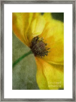 Yellow Poppy Framed Print by Priska Wettstein