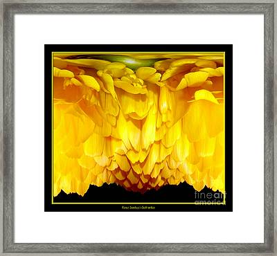 Yellow Ranunculus Abstract Framed Print by Rose Santuci-Sofranko
