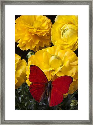 Yellow Ranunculus And Red Butterfly Framed Print by Garry Gay