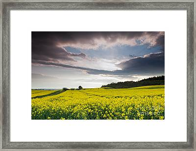 Yellow Rapeseed Field Beautiful Framed Print by Boon Mee