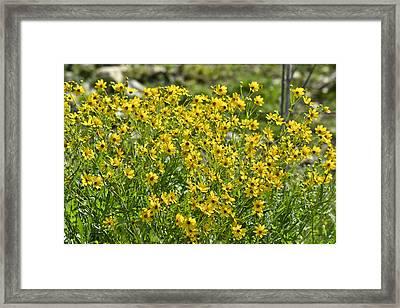 Yellow Rays Of Sunshine Framed Print by Teresa Dixon