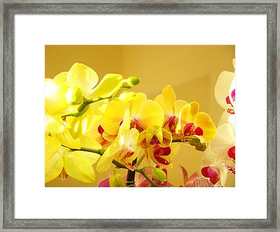 Yellow Red Orchid Flowers Art Prints Orchids Framed Print by Baslee Troutman