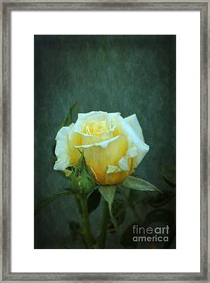 Framed Print featuring the photograph Yellow Rose 2014 by Marjorie Imbeau