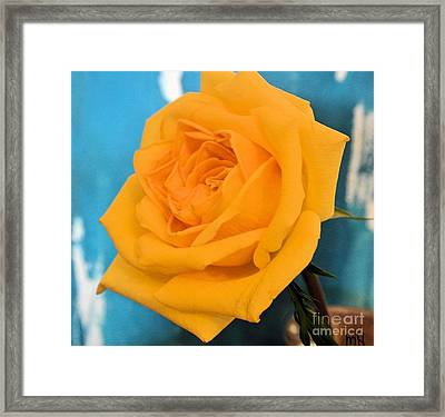 Yellow Rose Against Turquoise Framed Print