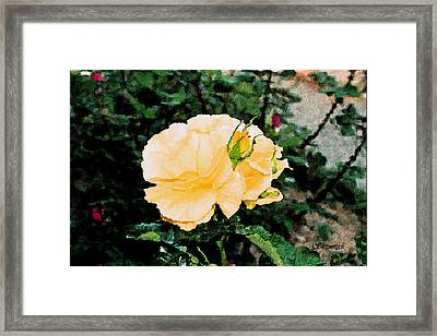 Yellow Rose And Bud Framed Print by Christopher Bage