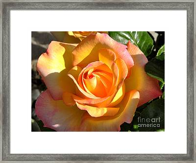 Framed Print featuring the photograph Yellow Rose Bud by Debby Pueschel