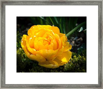 Framed Print featuring the photograph Yellow Rose by Dee Dee  Whittle