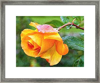 Yellow Rose Enhanced IIi Framed Print by L Brown