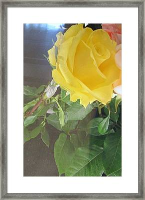 Yellow Rose- Greeting Card Framed Print