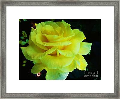 Yellow Rose Framed Print by Heather L Wright